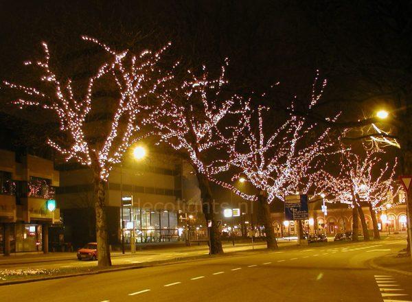 boomverlichting dordrecht